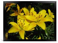 Floral Yellow, Framed Print