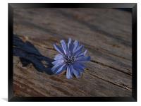 flower1, Framed Print