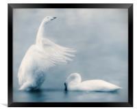 Swan Lake, Framed Print