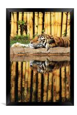 Tiger, Tiger, Framed Print