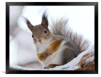 Squirrels posing, Framed Print