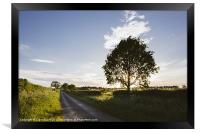 Evening sunlight over a remote country road. East , Framed Print