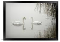 SWANS IN THE MIST, Framed Print