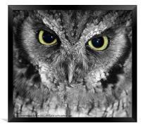 Screech owl, Framed Print