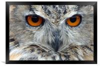 Eagle Owl, Framed Print
