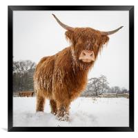 Horny cow, Framed Print