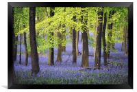 Bluebells at Ashridge, Framed Print
