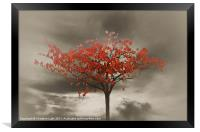 Autumn Red, Framed Print