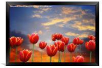Tulip Sunset, Framed Print