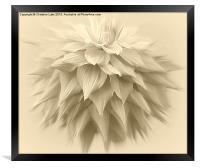 Shooting Star, Framed Print