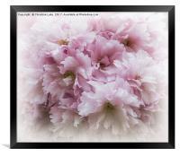Pink Frills, Framed Print