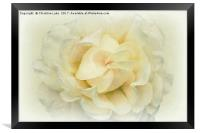 Mother Of Pearl, Framed Print
