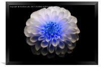 Crystal Blue, Framed Print