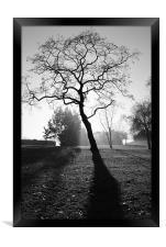 Misty Morning 2, Framed Print