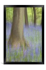 Bluebell Wood, Norfolk, Framed Print