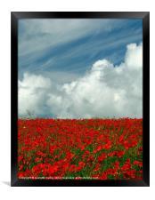 Poppy Field in Bloom.Pembrokeshire., Framed Print