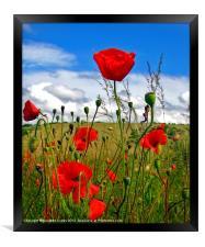 Poppy Dream., Framed Print