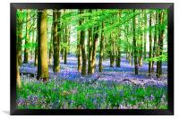 Bluebells At Ashridge, Framed Print