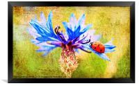 Ladybird, Framed Print