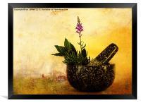 Herbs, Framed Print