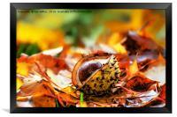Chestnut, Framed Print