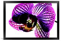 Orchid, Framed Print