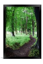 Tree Walk, Framed Print