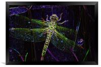 Mayfly, Framed Print