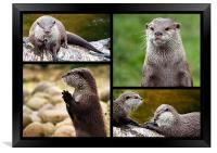 Otters, Framed Print