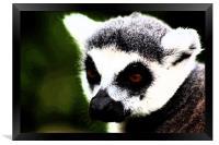 Ring Tailed Lemur, Framed Print