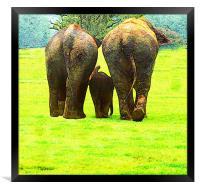 Elephants, Framed Print