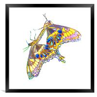 Butterflies, Framed Print