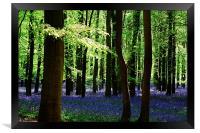 Sunshine Through The Canopy, Framed Print