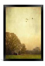 one day i will fly away, Framed Print