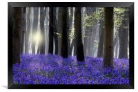 Bluebell Wood, Framed Print