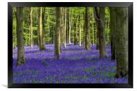 Bluebell Woodland, Framed Print