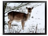 Deer in Wintertime, Framed Print
