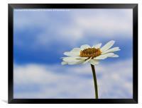 Daisy Daisy, Framed Print