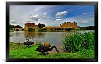 Black Swans at Leeds Castle II, Framed Print