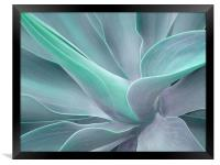 Agave Attenuata Abstract, Framed Print
