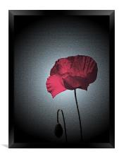 Dark Remembrance Poppy, Framed Print