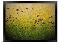 Verbena Flowers, Framed Print