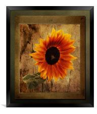Sunflower Framed, Framed Print