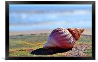 Seaside Sea shell, Framed Print