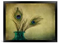 peacock feathers and vase, Framed Print