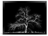 winter tree, Framed Print