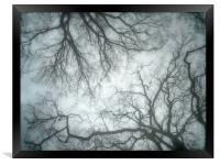 blue mist and trees, Framed Print