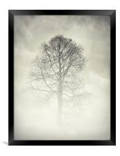 the winter tree, Framed Print