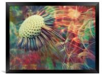 dandelion carnival, Framed Print