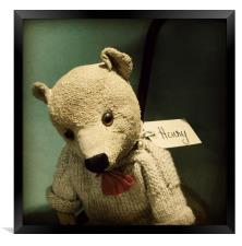 a bear called Henry, Framed Print